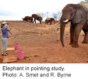 Elephants Understand Pointing, Research Shows