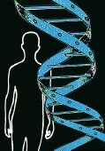 Study Ties Y Chromosome Variations to Prostate Cancer Risk