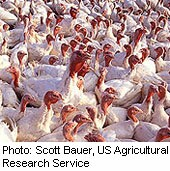 Bird Flu Virus Doesn't Spread Easily to Humans, Scientists Say