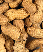 Gradual Exposure to Peanuts May Help Some Allergic Kids